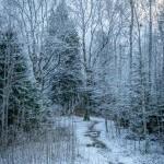 Jauktu koku mežs