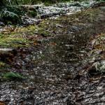 Meža taciņa