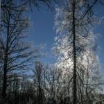Mežs ziemā