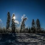 Mežs ainava